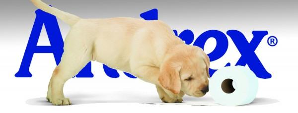 1050x400 Andrex Puppy
